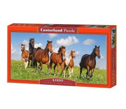 Castorland Paso Fino Herd (400034)