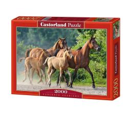 Castorland Purebred Arabians (200313)