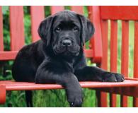 Clementoni Puzzle HQ  The Black dog - 417081 - zdjęcie 2