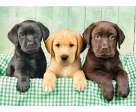 Clementoni Puzzle HQ  I tre Labrador - 417220 - zdjęcie 2